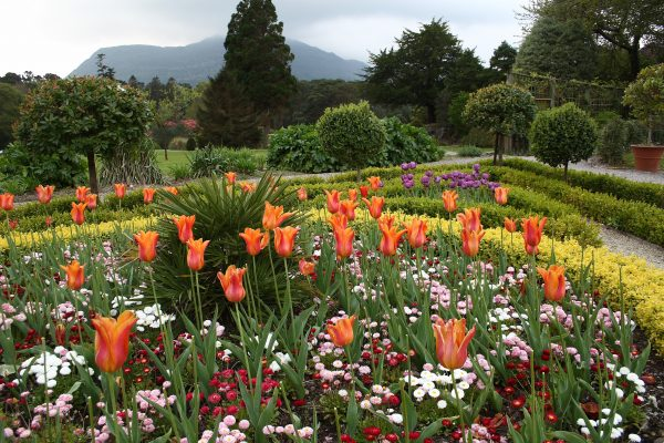 Muckross House and Gardens - Killarney